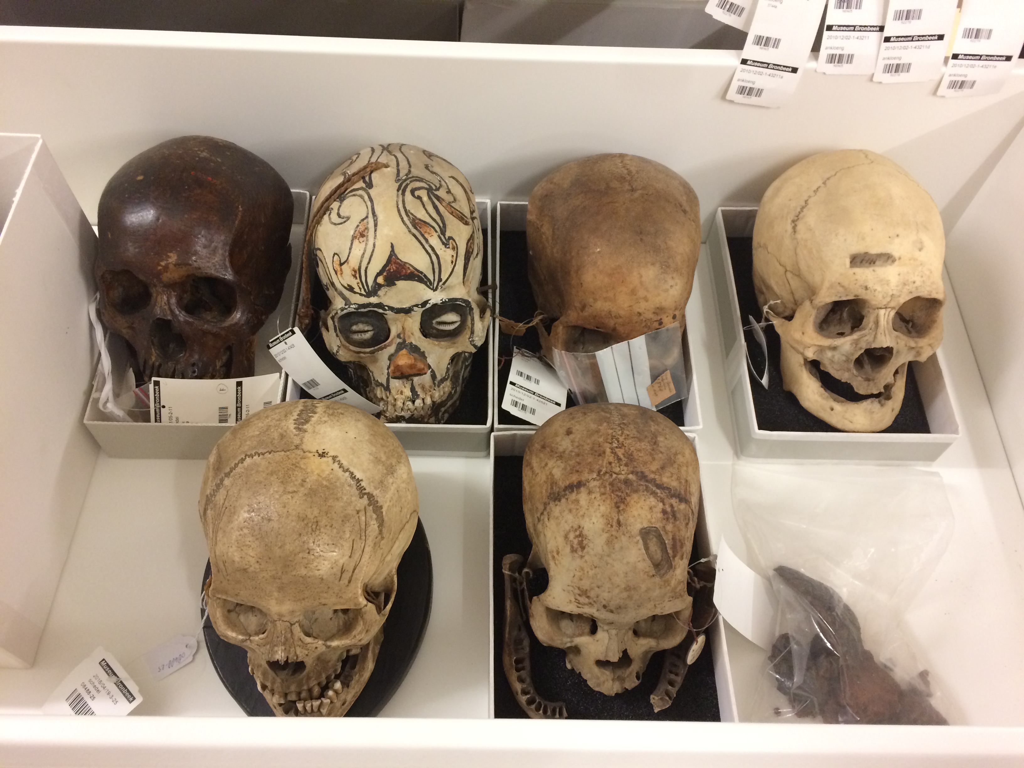 The-Archive-Series - skulls