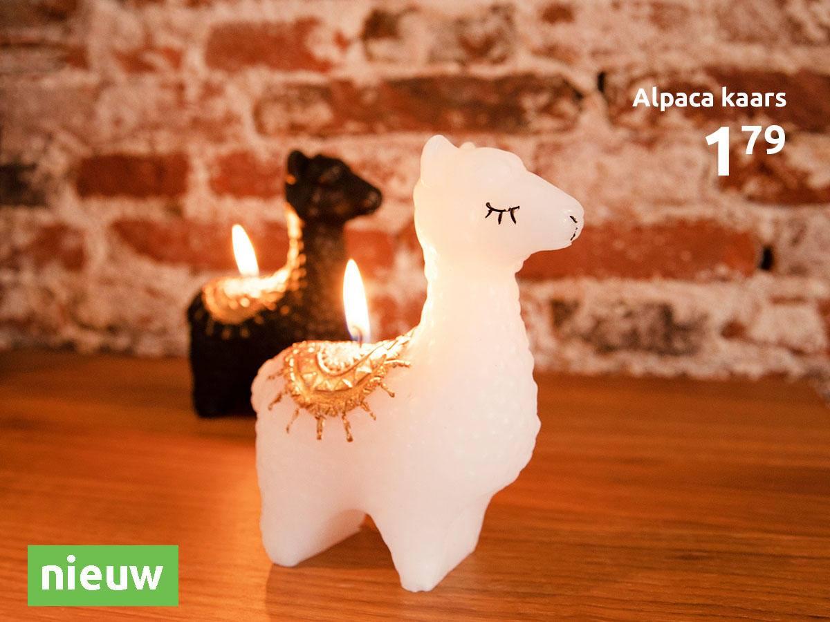 Action-shoot-alpaca-kaarsen
